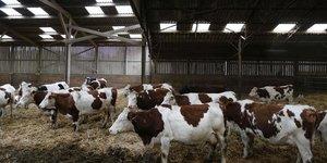 Les exploitations laitiEres ayant recours aux pAturages seraient plus Ecologiques et plus Economiques selon une rEcente Etude.
